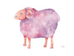 Funky Sheep-Purple Ram