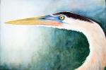 Great Blue Heron II, New Orleans, Louisiana