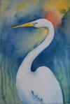 Great White Egret, New Orleans, Louisiana