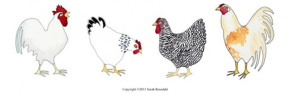 Difficult Chickens Adult Coloring Book | Sarah Rosedahl\'s Art